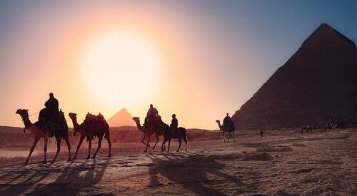 Piramide en kamelen in Egypte