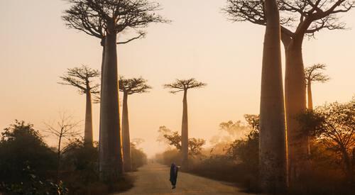 Vakantiebestemmingen Afrika