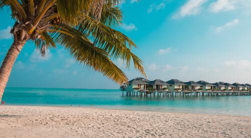 Strand met palmboom
